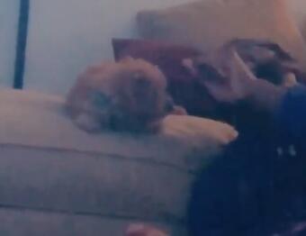 还有这种操作?恩比德亲自舔手示范训练小狗