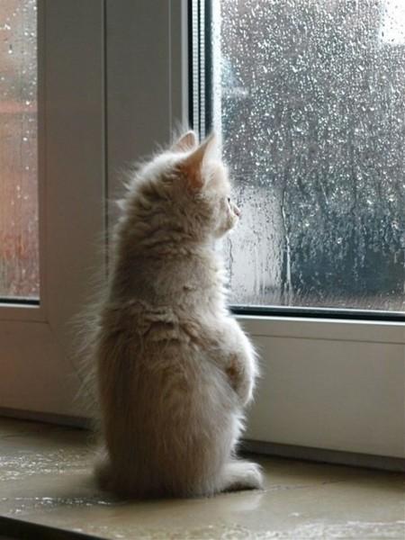 下雨不怕!给雨天跑步的一些小贴士