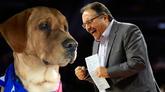 斯坦-范甘迪一家收养一只无人认领的宠物狗