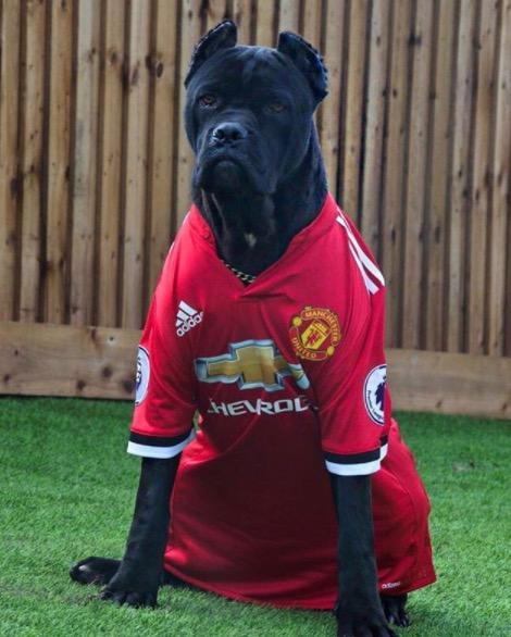 拉什福德晒新宠物,小黑狗套上曼联球衣