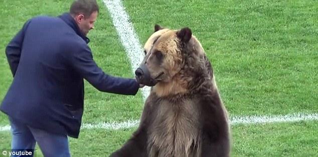 使用棕熊为世界杯揭幕战开球?国际足联予以否认