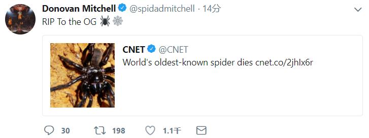 世界上已知的最年长的蜘蛛离世,米切尔发推悼念