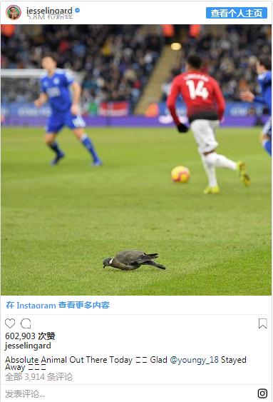 鸽子误入球场, 林加德调侃阿什利扬:这次躲过了没吃鸟屎