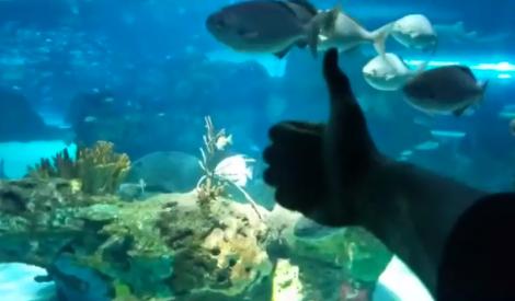 """放松一下!""""海王""""亚当斯参观海洋公园"""