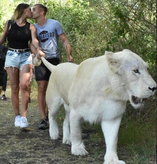 """大猫而已?德乌洛费乌度假期间和女友""""遛狮子"""""""