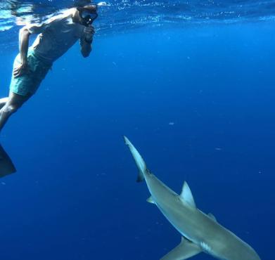 与鲨鱼共舞!吉诺比利晒照与鲨鱼一同游泳