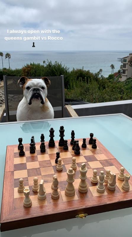 克莱-汤普森更新Ins晒与爱犬Rocco下国际象棋的照片